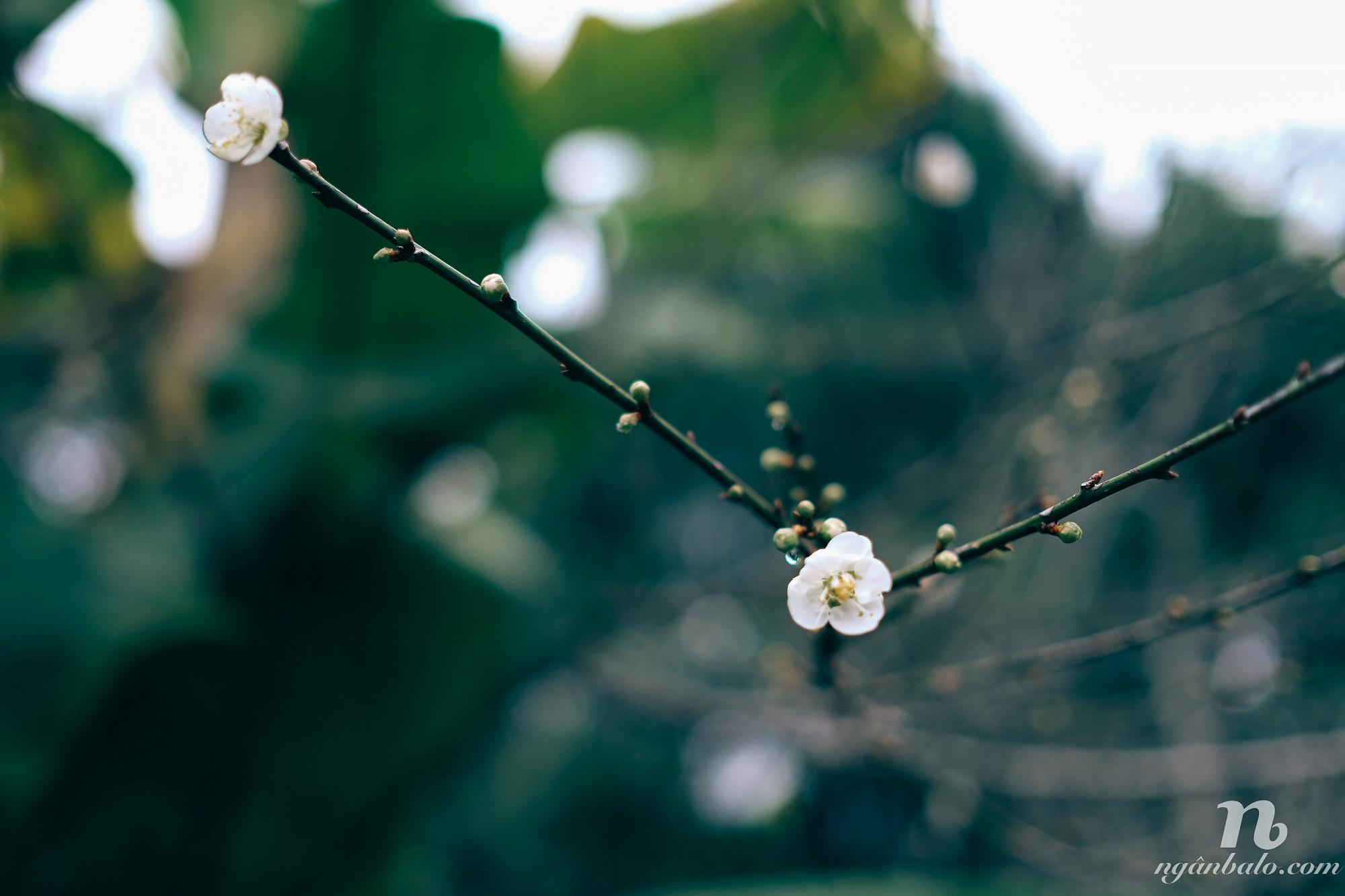 Tổng hợp kinh nghiệm du lịch bụi Đài Bắc và Đài Trung